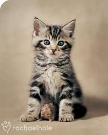 kočičky - Fotoalbum - Kočky - Kásné kočky - kočka + křeček